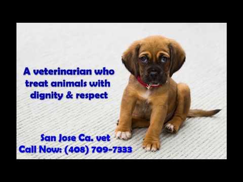 Veterinarian in San Jose Ca.   Call now (408) 709-7333