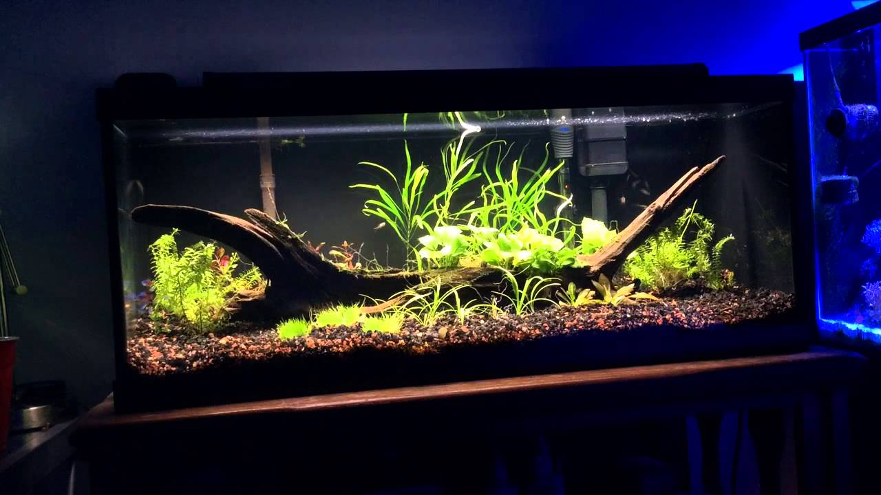 20 gallon tank youtube 20 gallon long planted tank for How many fish in a 20 gallon tank