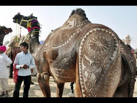 Sohrab Goth CAMEL mandi MOST EXPENSIVE Camel in Asia's Largest Cattle market Vlog#9