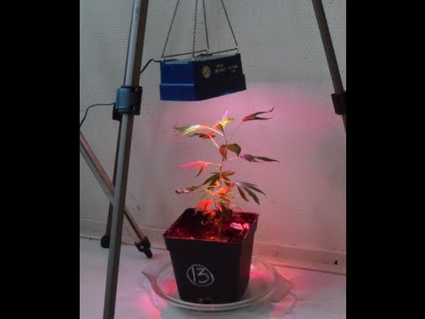 & How to grow weed with LED lights - YouTube azcodes.com