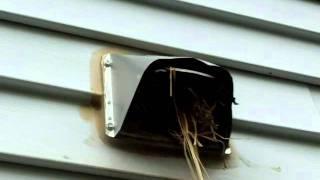 Nashville Home Inspector Discovers Bird Nest in Dryer Vent