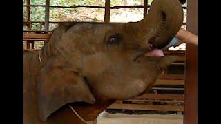 Индийские слоны ходят в магазин. Съедают и выпивают принесенные ими продукты и уносят пустые бутылки