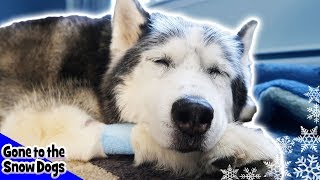 oakley after surgery and good news for shelby