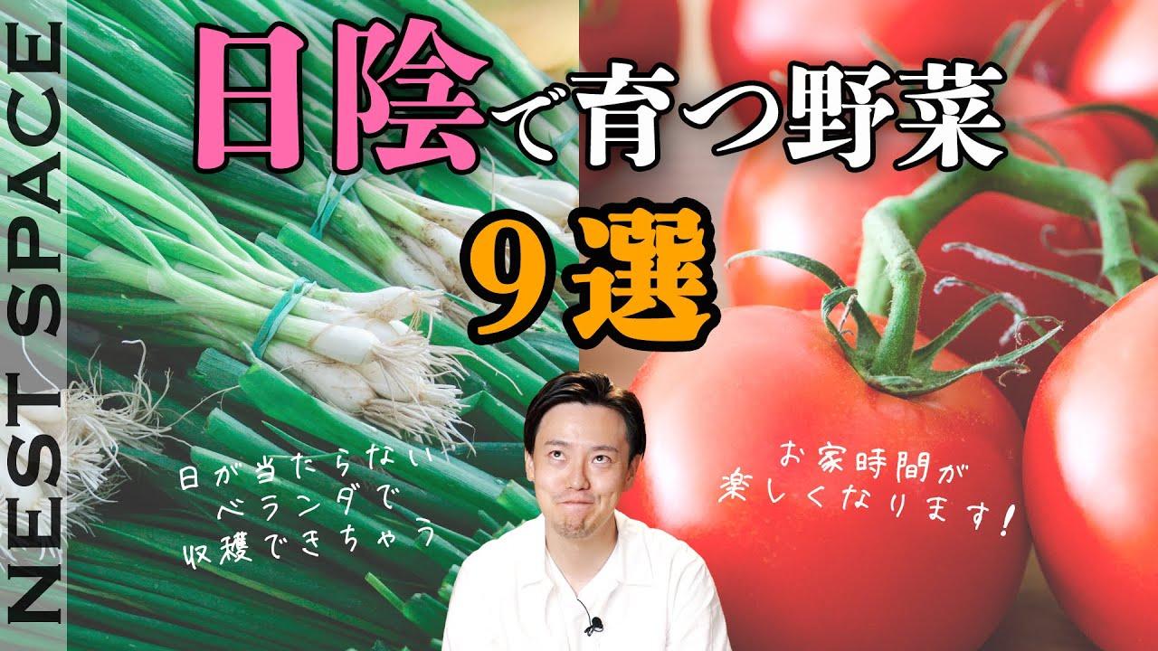 日陰でも育つ野菜9選と活用法!| 家庭菜園 | 春と夏の野菜 | 再生栽培 | ステイホーム