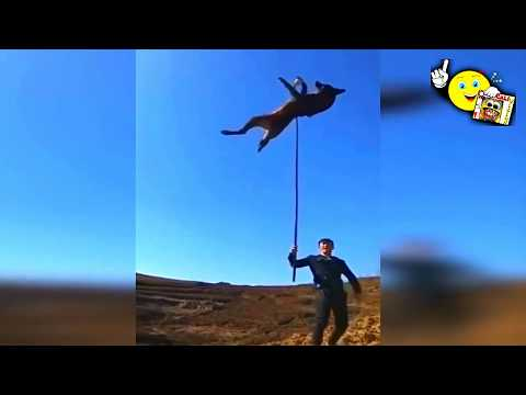 Top 10 Highest Jumping Dogs Competition World Record Dog Jumps Ultimate Animal Compilation