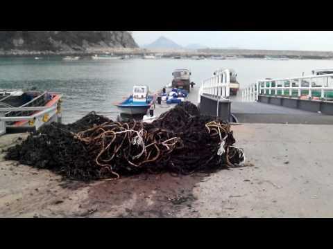 Морская капуста - Полезные и опасные свойства морской капусты