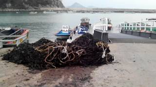 Работа в Корее на морской капусте