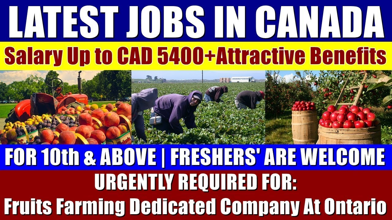 ENTRY JOBS IN CANADA: For Fruits Farming Dedicated Company At Ontario || No  Experience Are Welcome