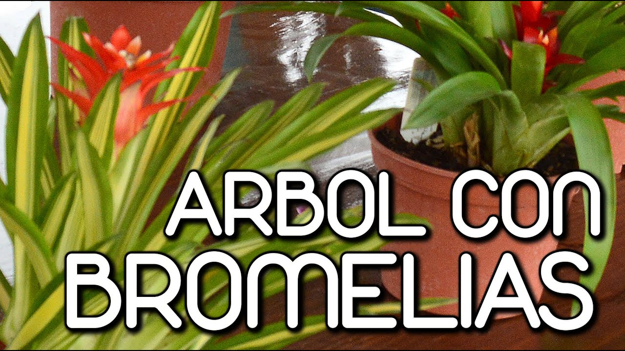 Como decorar un rbol con bromelias youtube for Como decorar un jardin con plantas