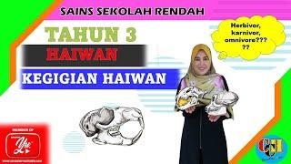 SAINS TAHUN 3 : KEGIGIAN HAIWAN