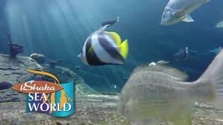 uShaka Sea World
