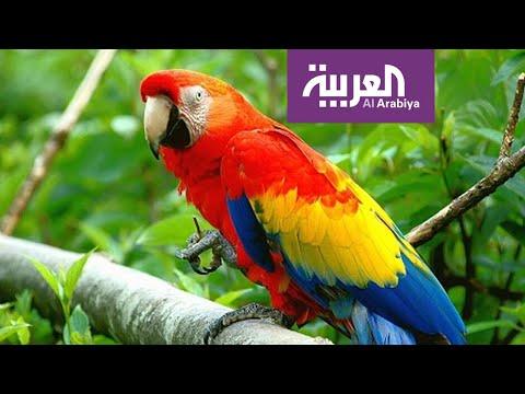 صباح العربية | أكاديمية للببغاوات في مصر  - نشر قبل 2 ساعة