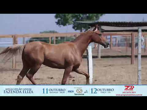 LOTE 1006 - TINK SON OF A DOC