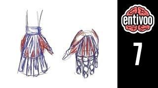 Aprende a dibujar las manos de una persona