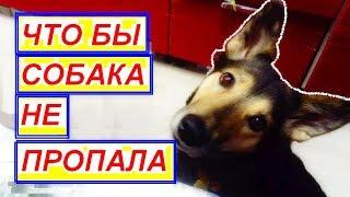 Купить собаку. Щенок купить. Ошейник для собаки. Пропала собака. Найдена собака.