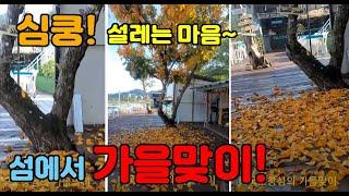 태국섬에서 가을맞이,  노란낙엽에 마음 심쿵!
