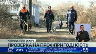 Казахстанские кинологи занимаются разведением самых умных собак