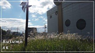[4k] 가을 풍경, 시네마틱 영상, 오즈모 포켓 l …