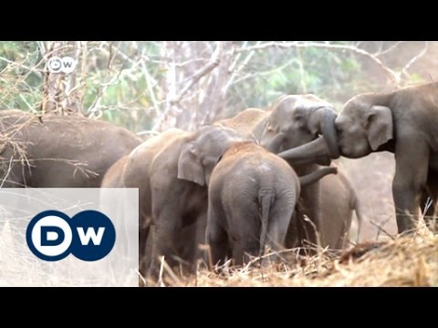 Thailand: Elephants lead busy nightlife | DW News