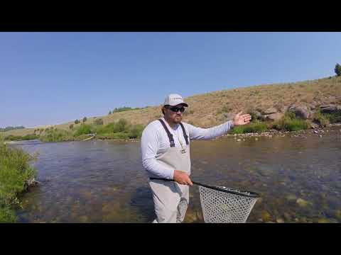 Fly Fishing for Yellowstone Cutthroat Trout in Idaho