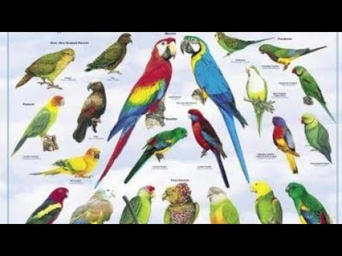 All parrot names
