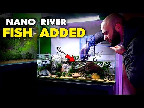 Adding Fish To Nano River Aquarium (Hillstream Loach & Panda Garra) | MD Fish Tanks