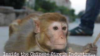 Exposed: Chinese Circus Cruelty