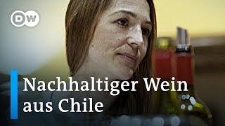Chilenischer Wein: Energiewende soll die Zukunft sichern | Global Ideas