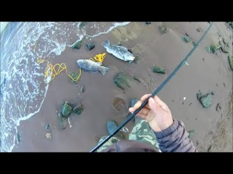 Tautog(Blackfish) Fishing At Staten Island, NY