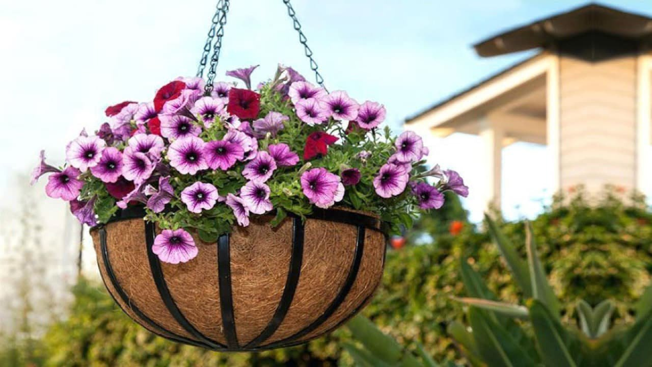 7 Fruits Vegetables You Can Grow In Hanging Baskets