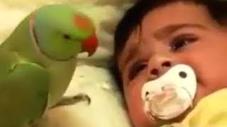 Parrot Nice Child Weeping