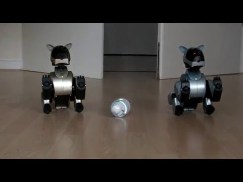 Sony Rolly meets Aibo