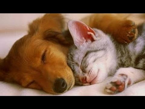 Música Relajante Para Calmar Mascotas Agitados Y Nerviosos ♥♥♥ Sueño Tranquilo Y Profundo