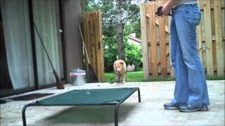 E-collar Training With A Nervous Dog-  Take The Lead K9 Training