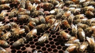 The Neonicotinoid View: Jeff Anderson Reviews EPA Labeling Initiative