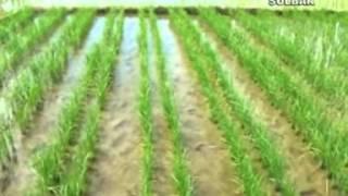 Video Video Diskusi Pengkajian Pertanian Dengan Wakil Gubernur Sulawesi Barat download MP3, 3GP, MP4, WEBM, AVI, FLV Agustus 2018