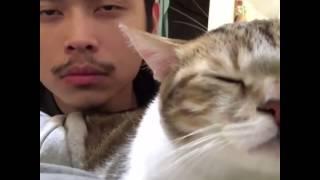 Кот танцует , кот под музыку , животное , котенок , человек и кот кивают под музыку