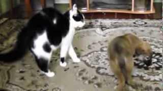 кошка впервые видит щенка