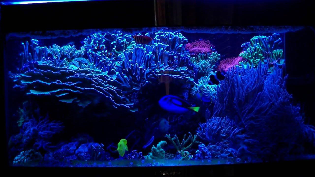 aqua medic percula 120 meerwasseraquarium reef tank corals sps marine aquarium salt water. Black Bedroom Furniture Sets. Home Design Ideas
