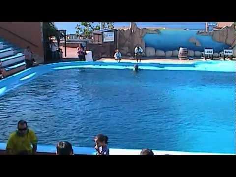 Marineland Mallorca Dolphins