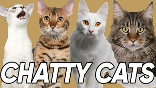 The 9 Most Talkative Cat Breeds