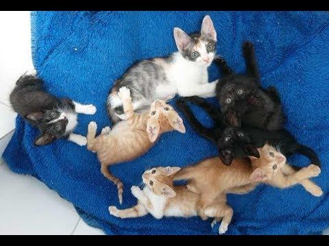 Resgate de 7 filhotes de gatos abandonados em terreno, para doação