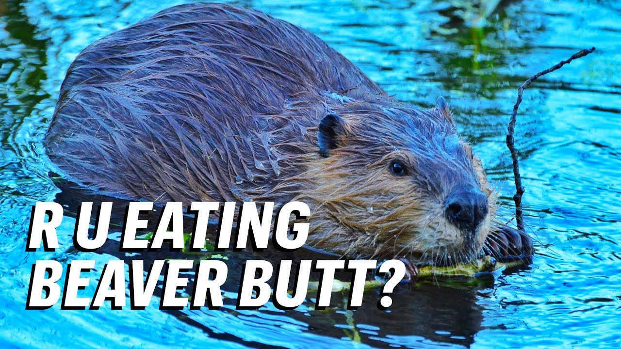 Here's what to do when a beaver family moves to your property | 720x1280