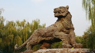 Biggest Lion in te World - Beijing Zoo