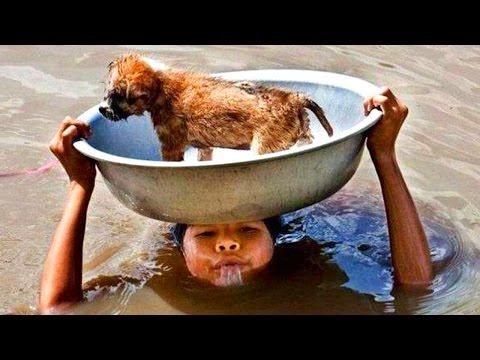 10 Unglaubliche Menschen die Tiere gerettet haben!