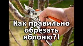 Как правильно обрезать яблони?! Очень подробное видео!!!