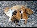 Kucing Menjaga Anaknya#2