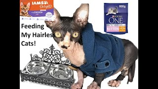 What I Feed My Hairless Cats!