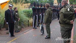 スコットランドのエジンバラ動物園で飼育されている皇帝ペンギンのニル...