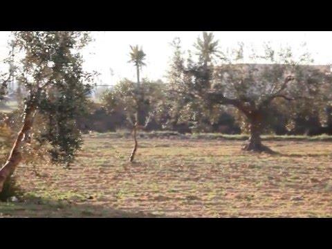 Fairuz - Katabna W Ma Katabna  فيروز - كتبنا وما كتبنا